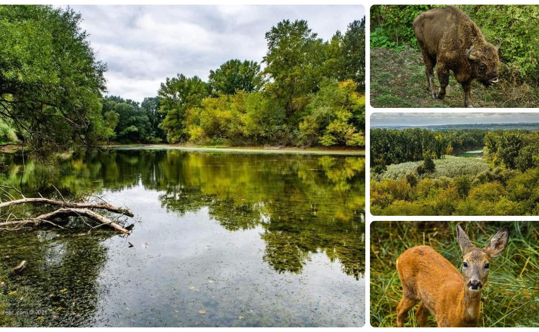 (foto) Rezervația Naturală Pădurea Domnească – un colțișor de rai din nordul Moldovei